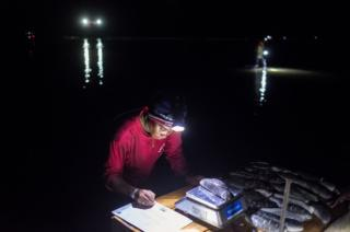 A woman weighs sea cucumbers at night on scales in the shallow water off the coast of Tampolove.