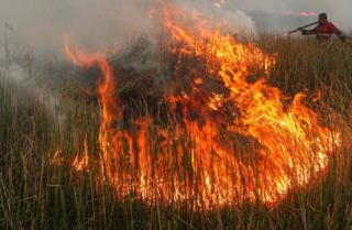 Fire at a peatland forest in South Sumatra