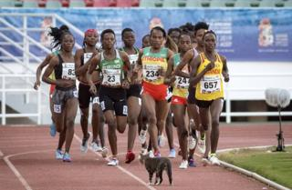 A cat stands in front of runners during a race