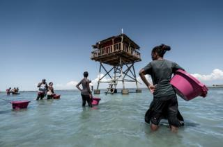 Sea cucumber farmers prepare to release new stock into their farms off the coast of Tampolove.